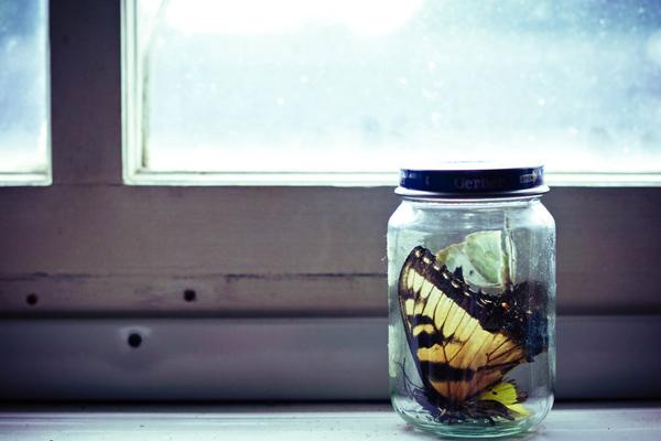 still-life-photography-023