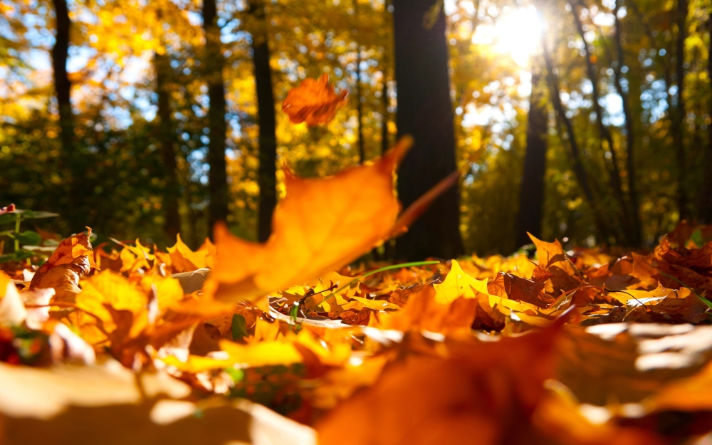 01-fallen-leaves-pal-autumn-falling