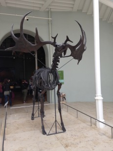 stuffedgiantdeer_extinct